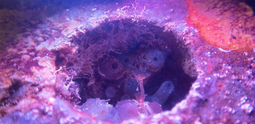 biopode créant des habitats de vie marine dans des infrastructures sous-marines en béton 4