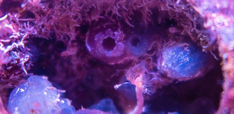 biopode créant des habitats de vie marine dans des infrastructures sous-marines en béton 8