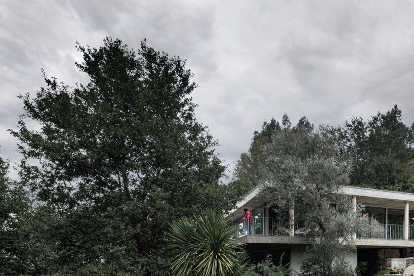 joão marques franco conçoit la maison de la cime des arbres dans le nord du portugal designboom