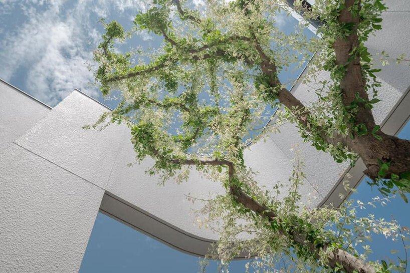 L'atrium 55 sathorn de kuanchanok pakavaleetorn permet aux fenêtres de faire face à l'intérieur